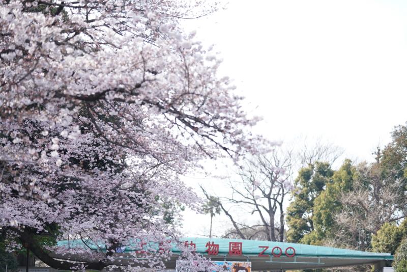 f:id:takayuta818:20170402182246j:plain