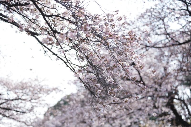f:id:takayuta818:20170402182307j:plain