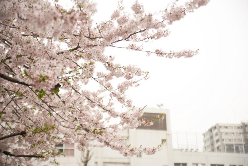 f:id:takayuta818:20170409112208j:plain
