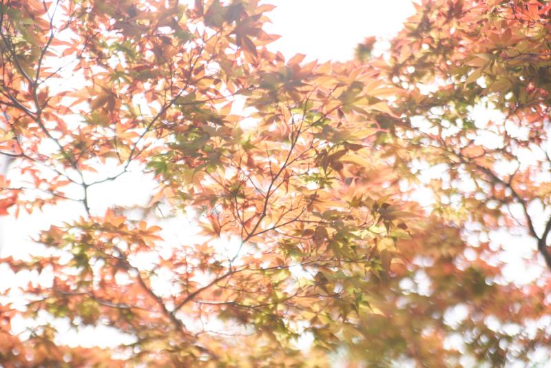 f:id:takayuta818:20170503204635j:plain