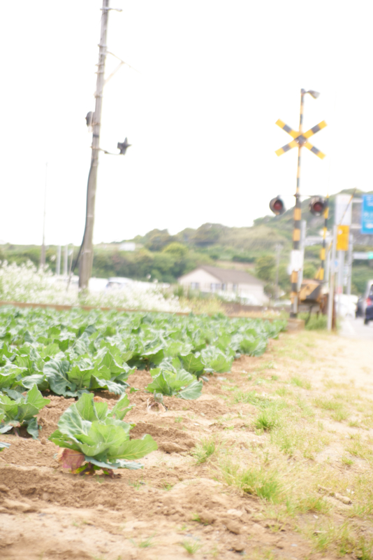 f:id:takayuta818:20170505163136j:plain