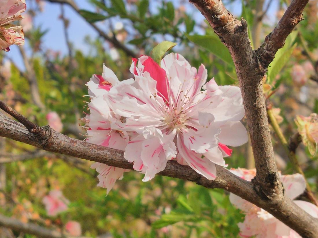 2色の花びら