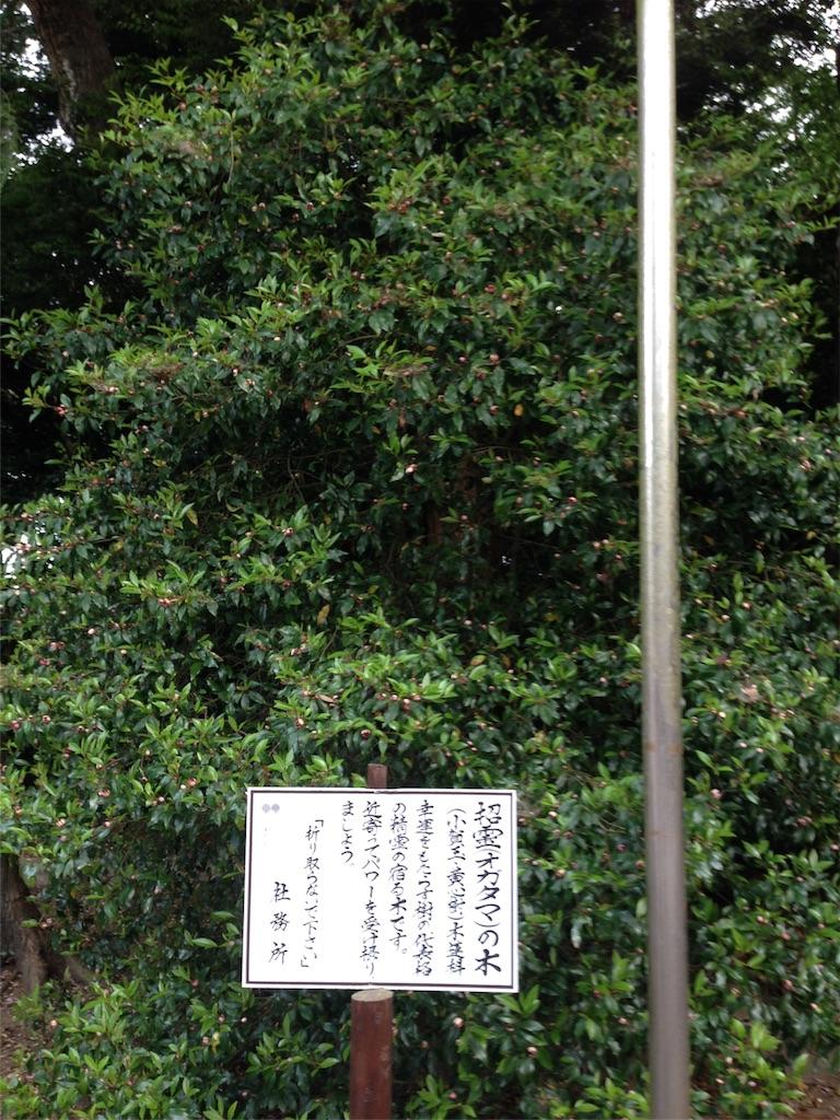 f:id:takedamiki-J:20190520223058j:image