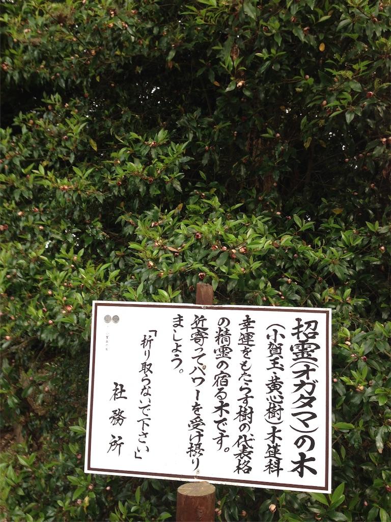f:id:takedamiki-J:20190520223133j:image