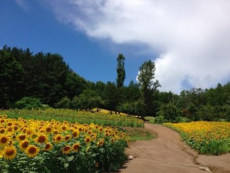 f:id:takedasawa:20120816230858j:image