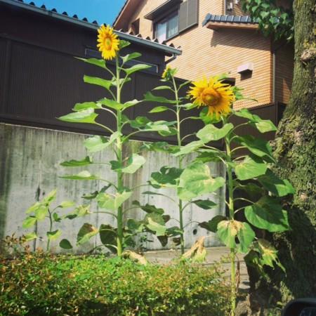 f:id:takedasawa:20130627083746j:image