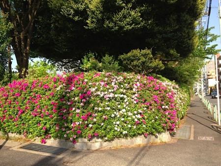 f:id:takedasawa:20131123235115j:image