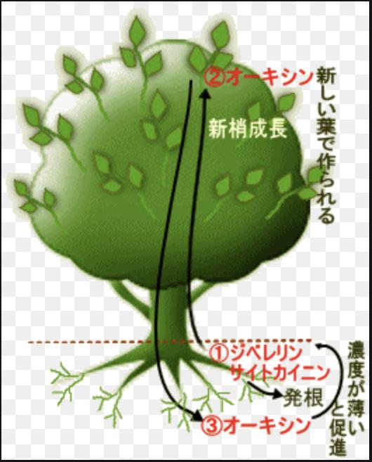 f:id:takehiro0405:20210422215106p:plain