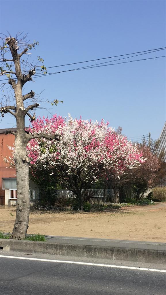 f:id:takehironishiwaki:20180401225616p:image