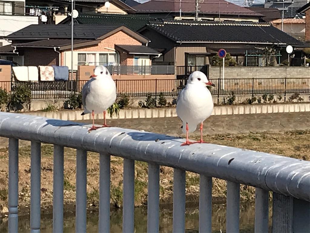 f:id:takejiisan:20190114195445j:image