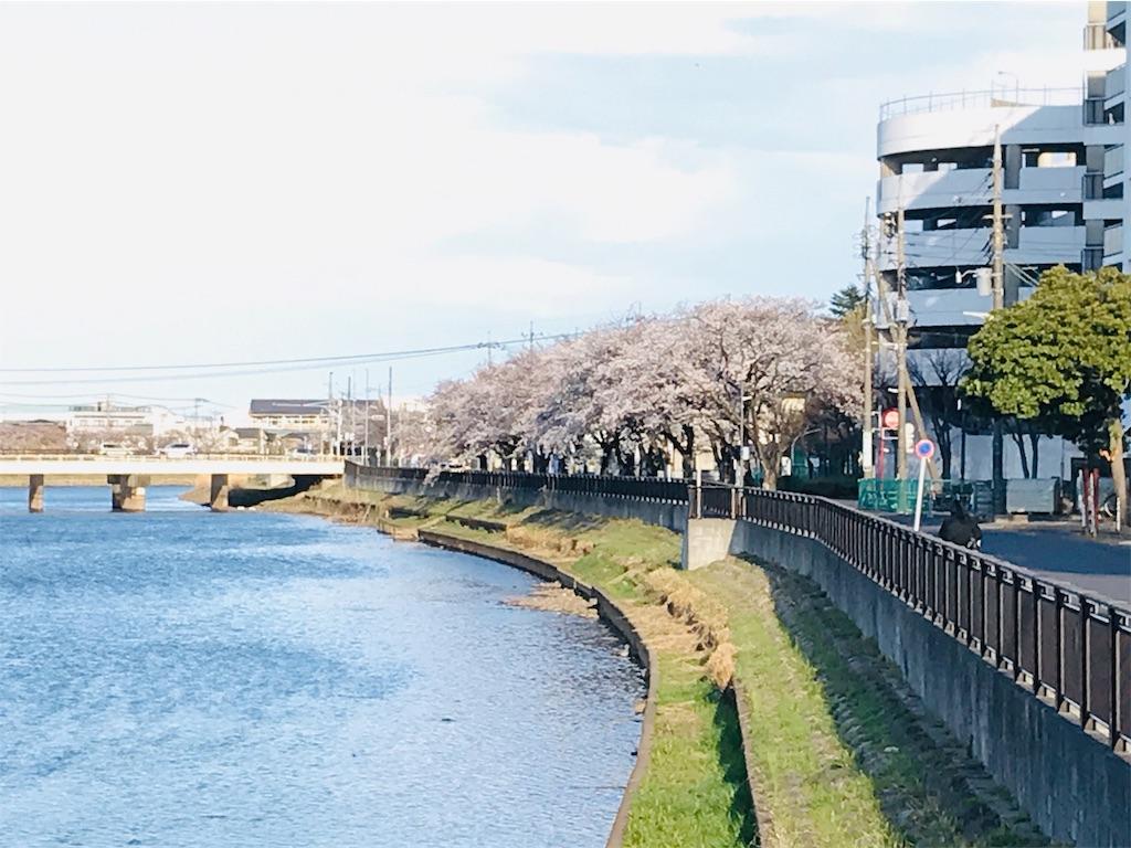 f:id:takejiisan:20190404061610j:image