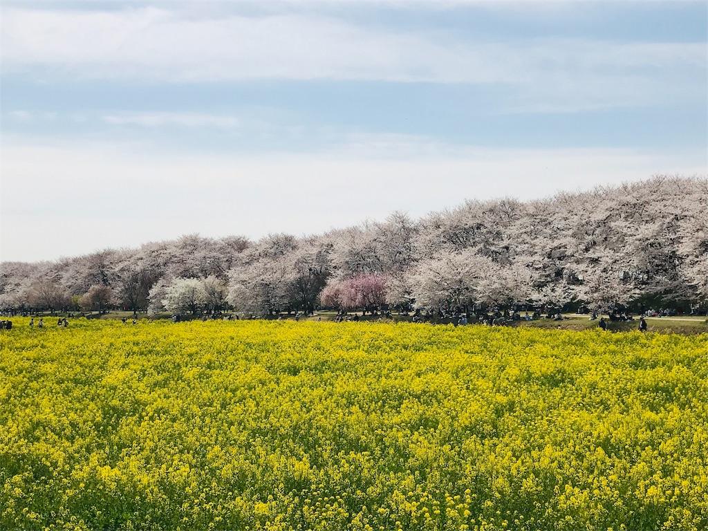 f:id:takejiisan:20190405150253j:image