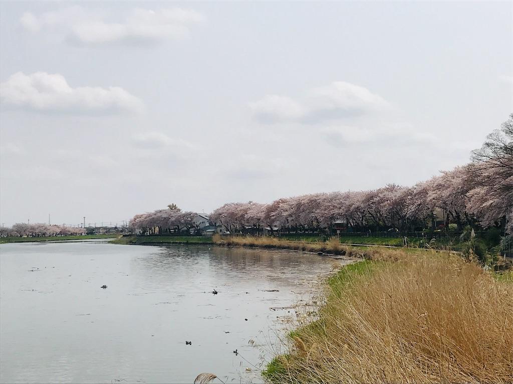 f:id:takejiisan:20190407113513j:image