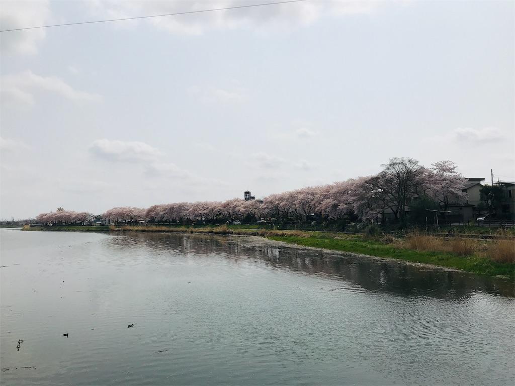 f:id:takejiisan:20190407114311j:image