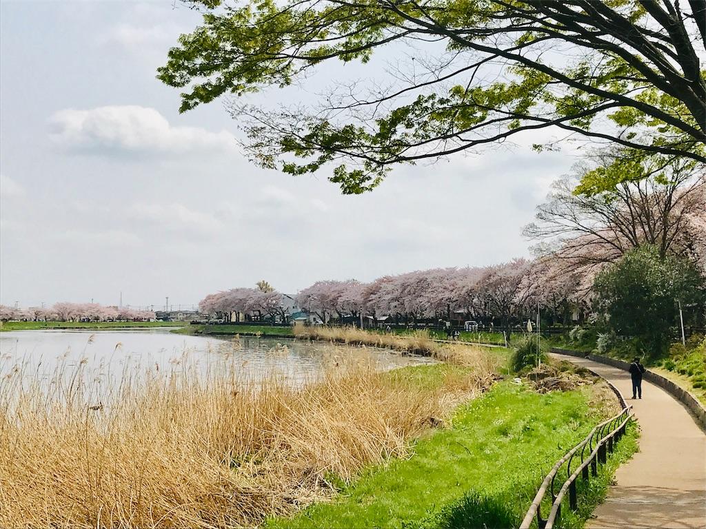 f:id:takejiisan:20190407151302j:image