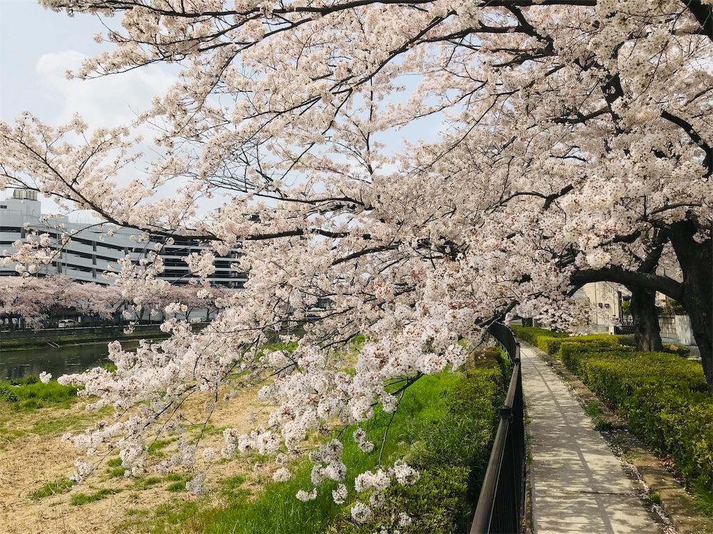 f:id:takejiisan:20190407151714j:image