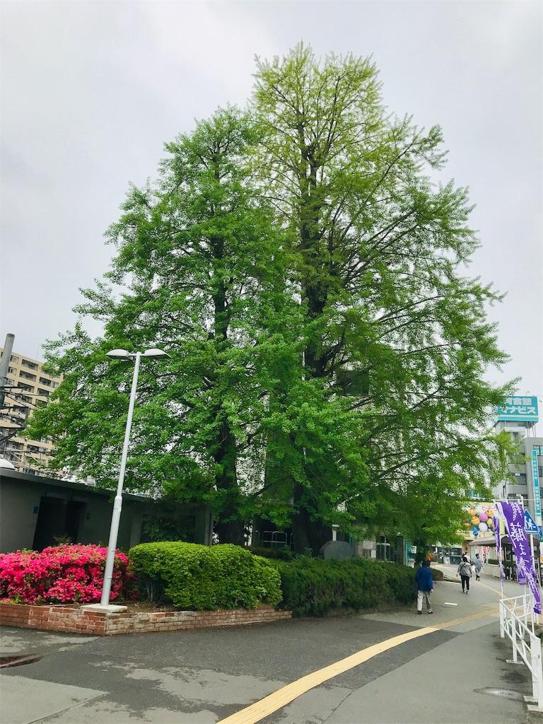 f:id:takejiisan:20190425145902j:image