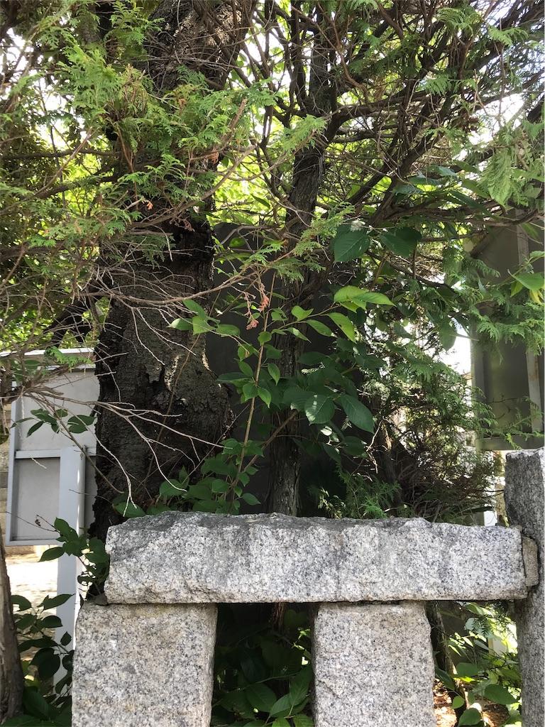 f:id:takejiisan:20190618124917j:image