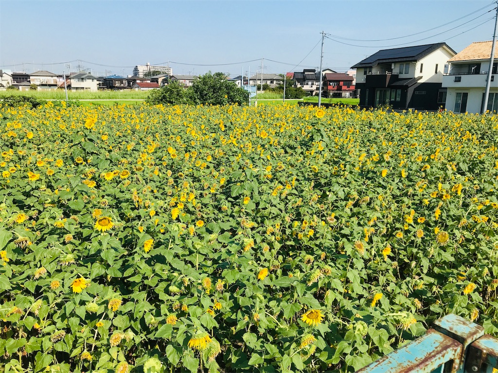 f:id:takejiisan:20190810141441j:plain
