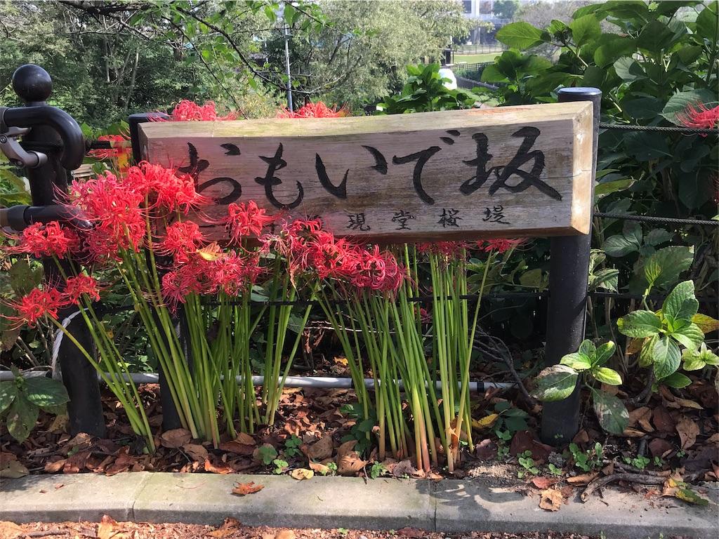 f:id:takejiisan:20191021150222j:image