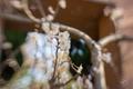 レンズベビーSOL45 桜