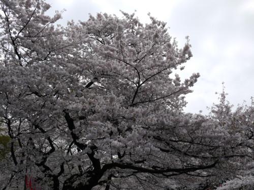 f:id:takeru-c:20110410120402j:image