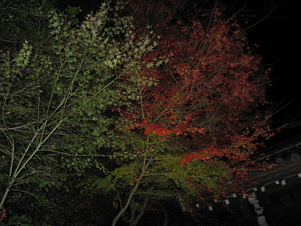 f:id:takerunba:20081207193118j:image:w500