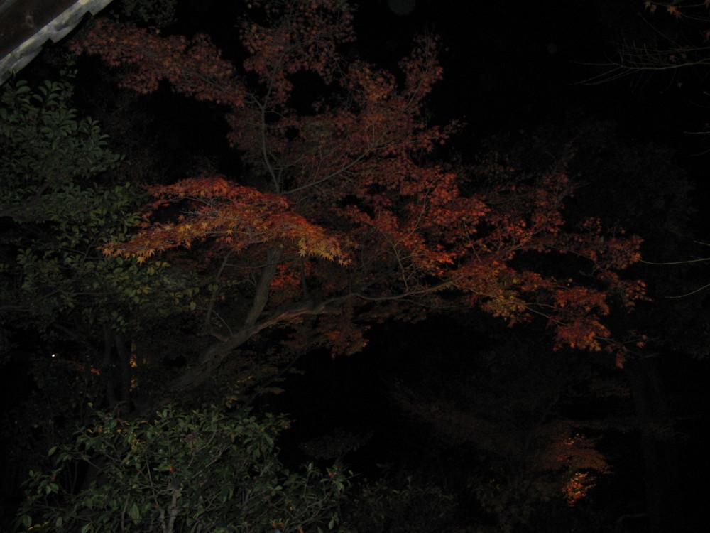f:id:takerunba:20081207193148j:image:w500
