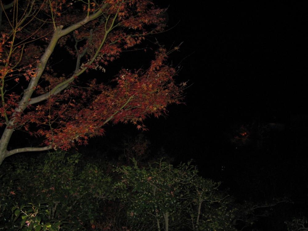 f:id:takerunba:20081207194037j:image:w500