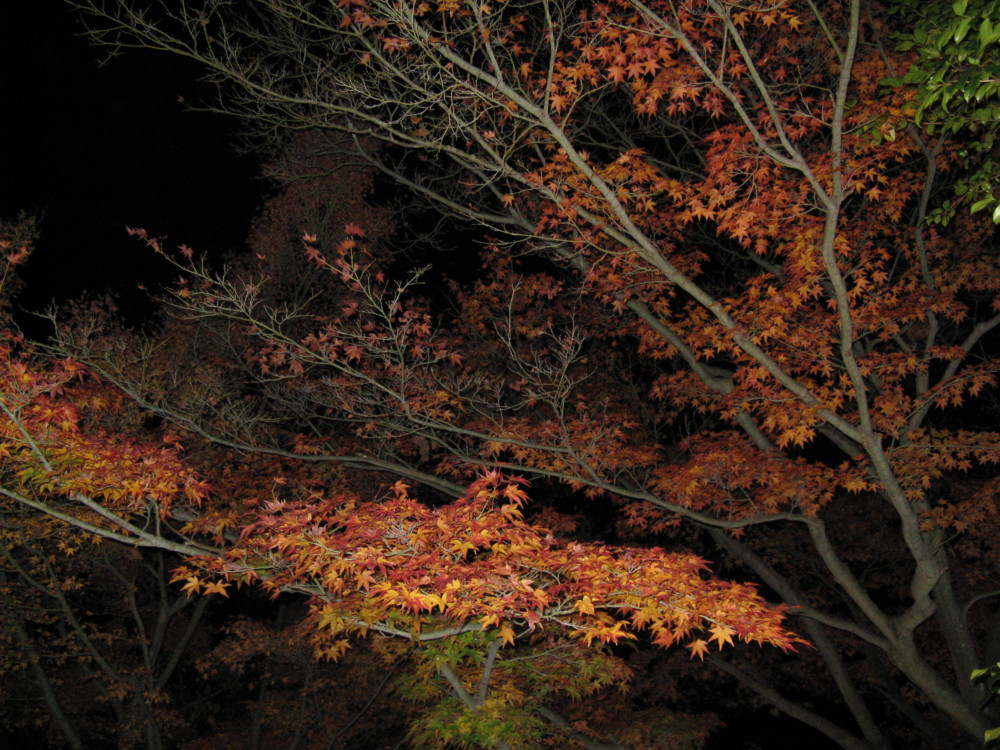 f:id:takerunba:20081207200524j:image:w500