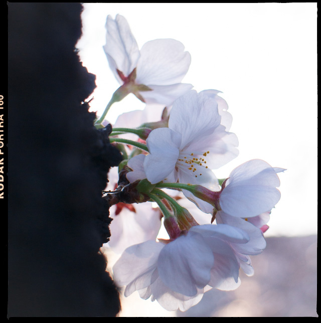 f:id:takeshif55:20130319174200j:image