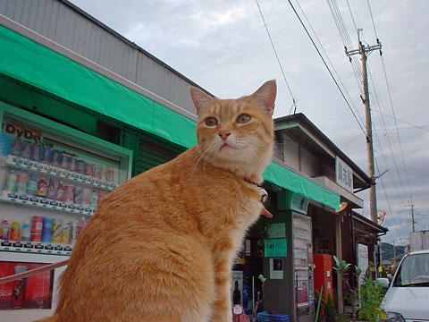 031012貴志駅前のネコ