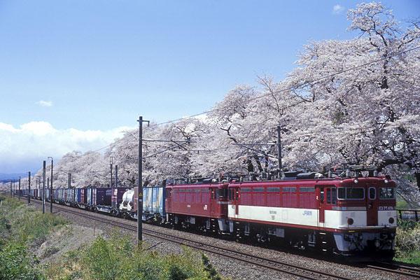 040423白石川堤千本桜とED75