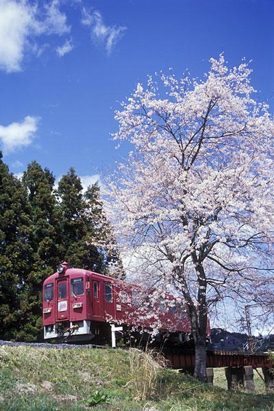050424くりでん田町桜