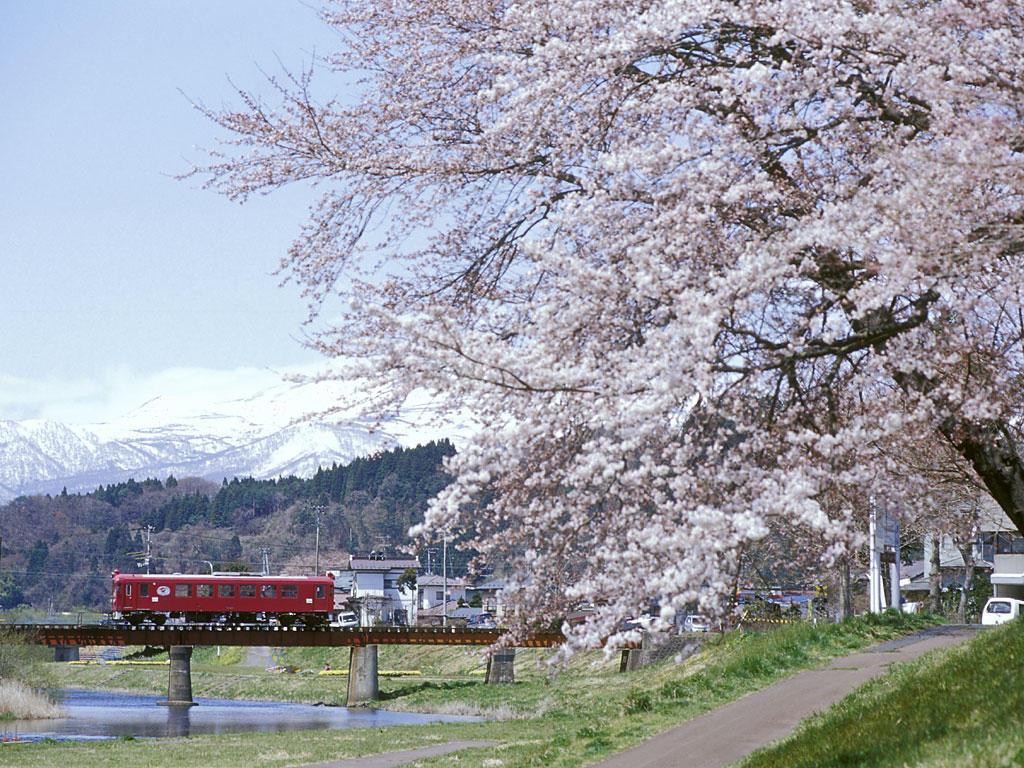 050424くりでん三迫川桜