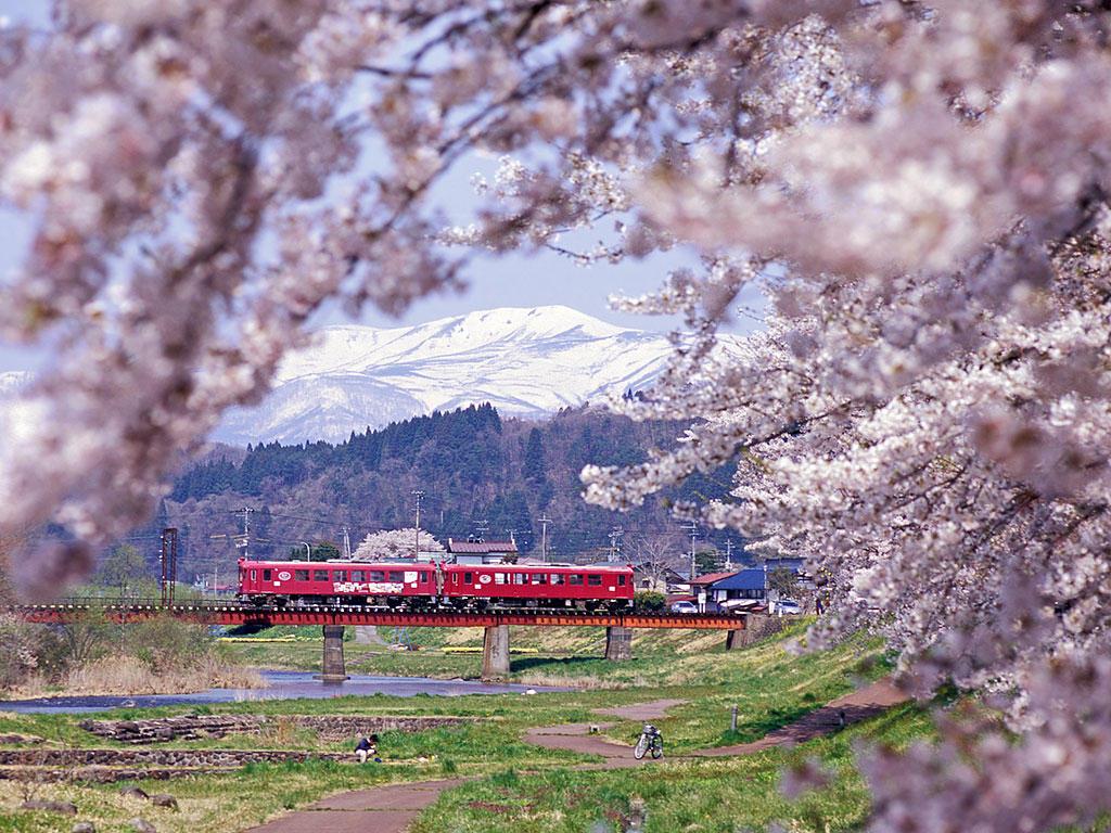 060429くりでん三迫川の桜1