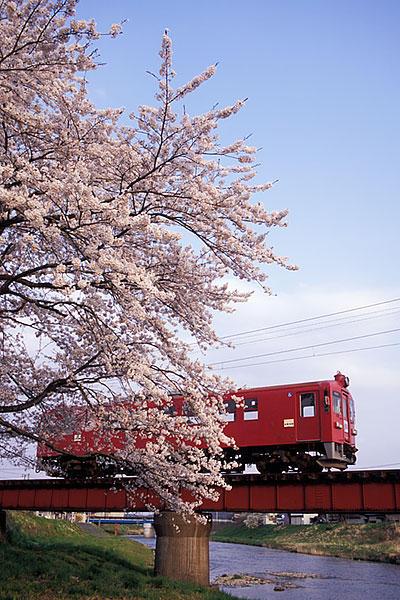 060429くりでん鶯沢桜夕方