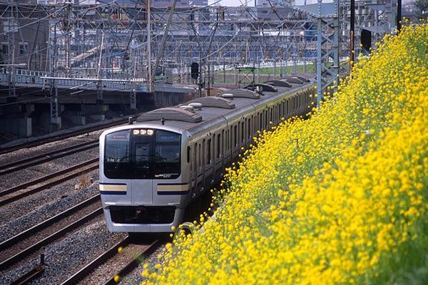 080323横須賀線と浦島の菜の花
