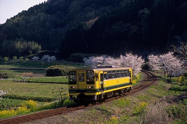 080406桜並木のカーブを抜けるレールバス