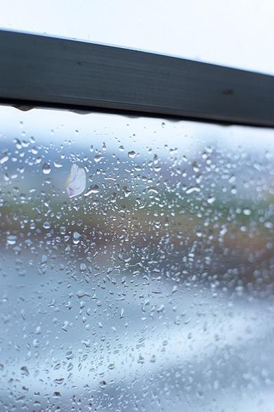 080427内陸線の窓に花びら