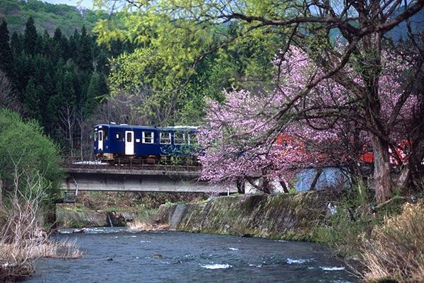 080428上桧木内川と桜