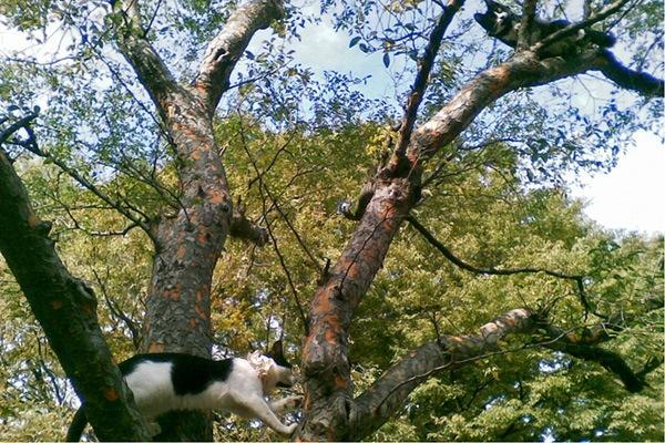 081012日比谷公園のネコ