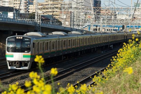 090315 浦島の菜の花と東海道線E217系