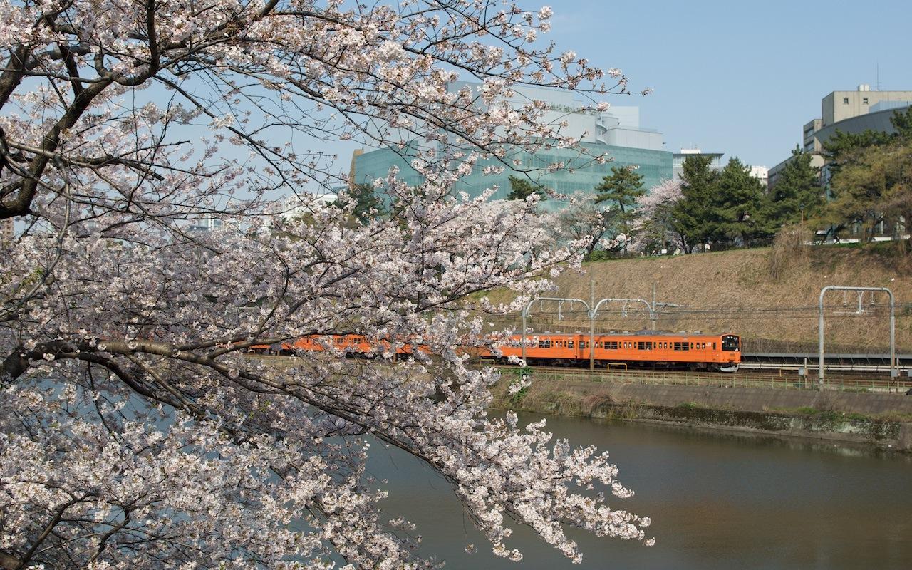 090406 外濠の桜と201系