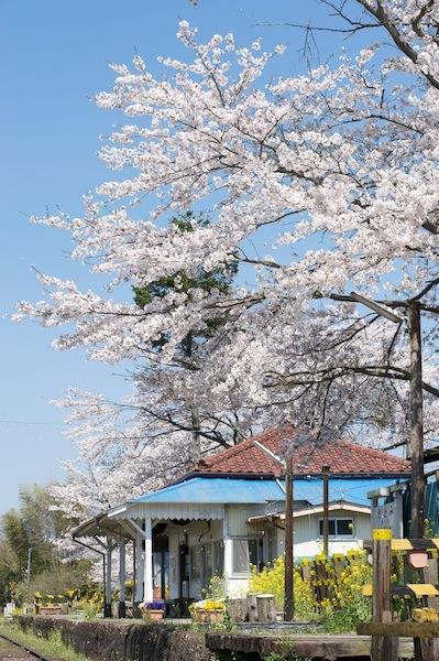 090410 里見駅舎と桜