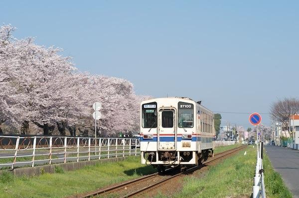 090411 勝田駐屯地の桜を背に走る