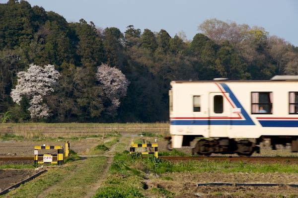 090411 小さな踏切と山桜