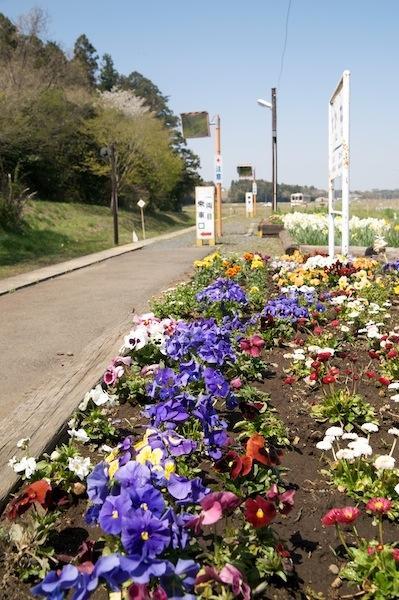 090411 中根駅の花壇