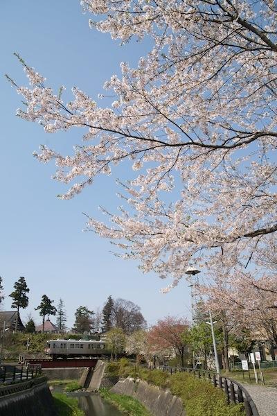 090429 紙漉町緑地の桜と大鰐線