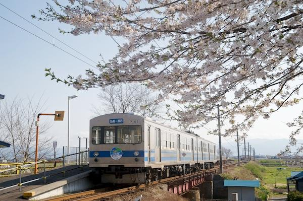 090429 弘南線境松の桜